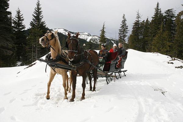 Slut det hele af med en tur i hestevogn.